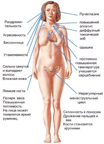 Ультразвуковая диагностика  УЗИ сердца щитовидной железы