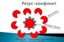 Резус-конфликт как причина проведения УЗИ головного мозга