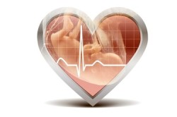 Сердцебиение плода во время УЗИ