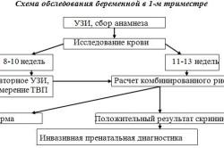 Схема обследования беременной в первом триместре