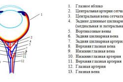 Схема кровоснабжения глаза на основании результатов УЗИ